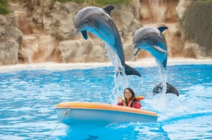 Loro Parque dolphin show audience participation
